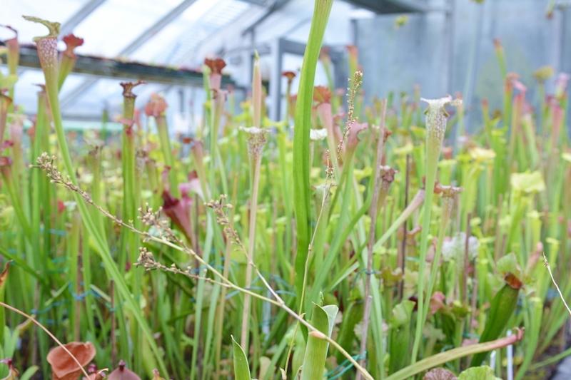 botanische-sammlung-05