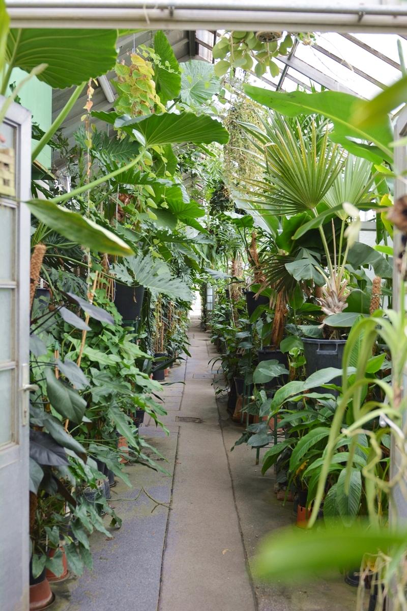 botanische-sammlung-07