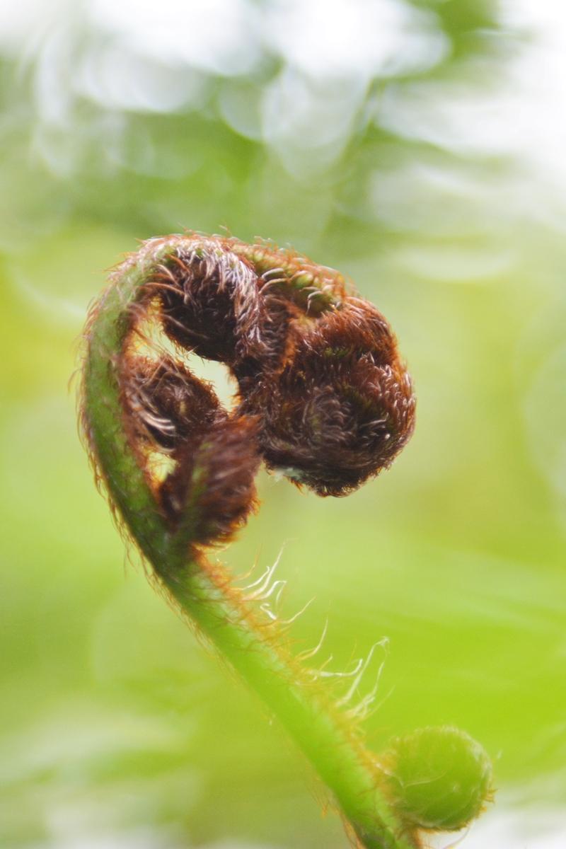 botanische-sammlung-farn-03