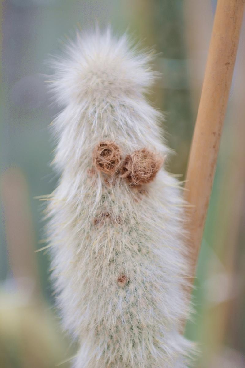botanische-sammlung-kaktus-01