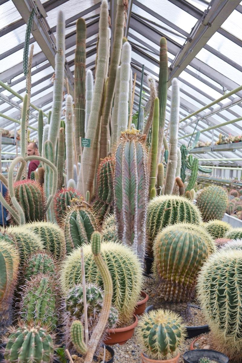 botanische-sammlung-kaktus-02