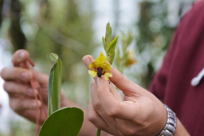 botanische-sammlung-orchidee-01