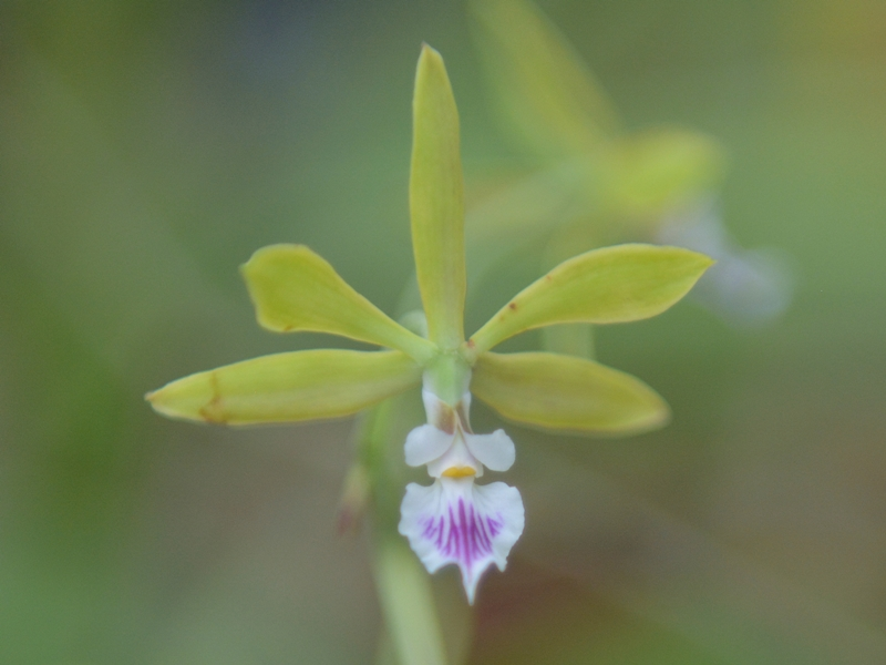 botanische-sammlung-orchidee-02