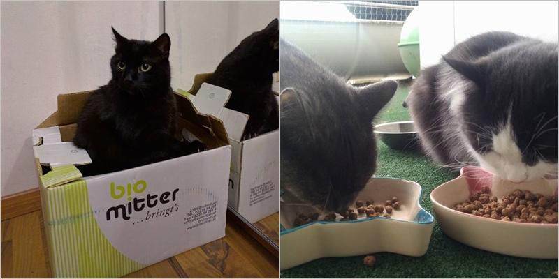 missxoxolat-instagram-oktober-2016-cats